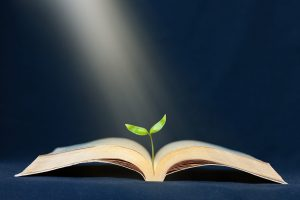 Plant grows to the sunbeam from the book. Education, literature, knowledge growth concept